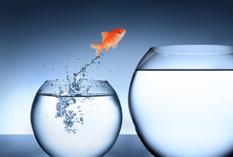 A Goldfish leaping from a small fishbowl to a larger fishbowl