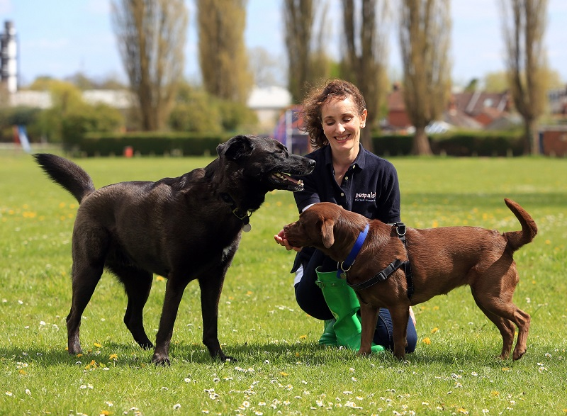 Petpals franchisee playing in the park with dogs