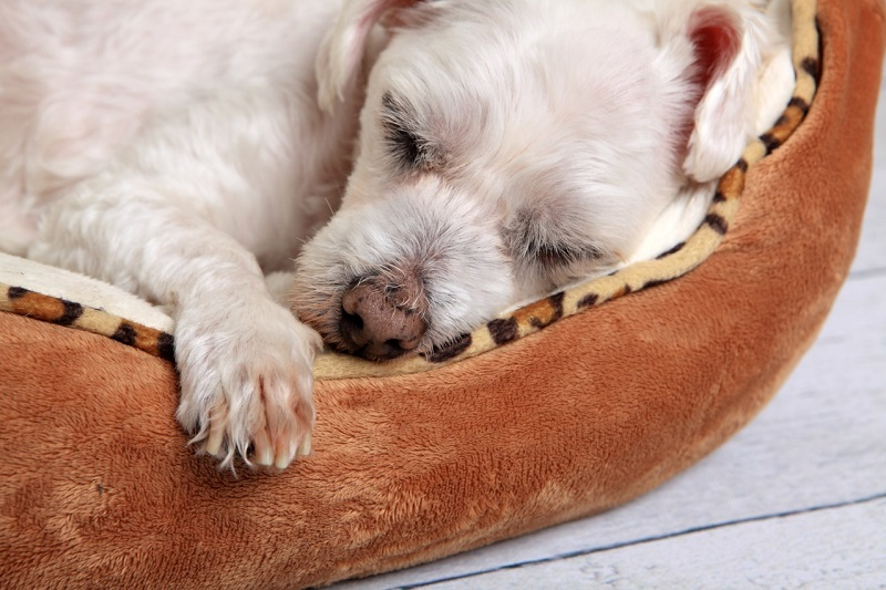 cute dog sleeping in basket a petpals client