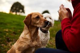 largeOscar-pet-foods-dog-food-news.jpg